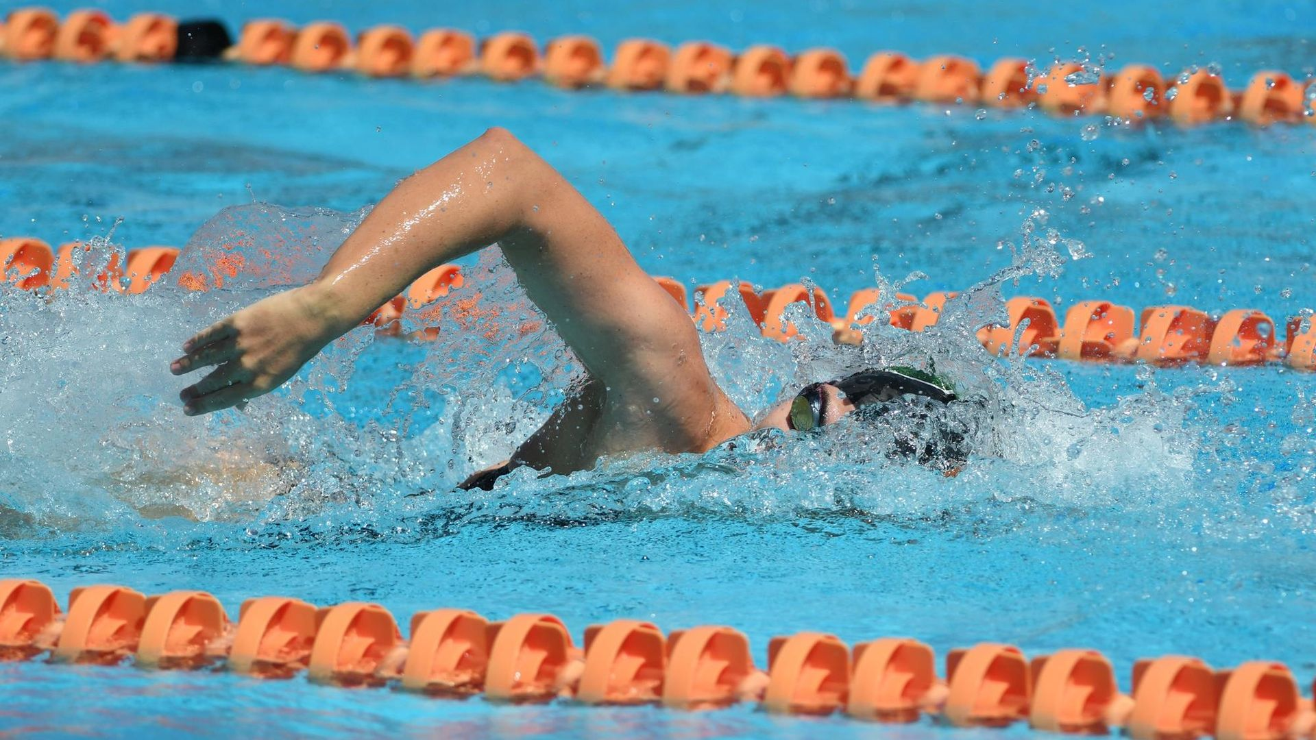 Swim / Dive Drops Tri-Meet with Alabama, Florida State